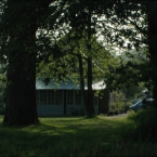 Esskastanienbaum im Garten